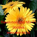 Gerbera Jamesoniova x hybrida Revolution Mini Mix F1