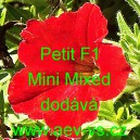 Petunia hybrida Petit F1 Mini Mixed