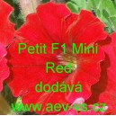 Petunia hybrida Petit F1 Mini Red