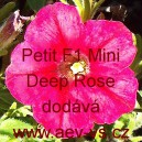 Petunia hybrida Petit F1 Mini Deep Rose