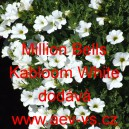 Calibrachoa Million Bells Kabloom White