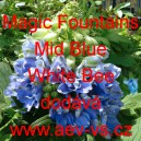 Ostrožka vyvýšená Magic Fountains Mid Blue White Bee