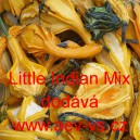 Okrasná tykev Little Indian Mix