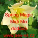 Orlíček modrý Spring Magic Midi Mix