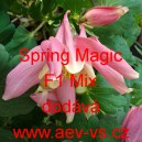 Orlíček modrý Spring Magic F1 Mix
