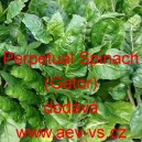 Mangold Perpetual Spinach (Gator)