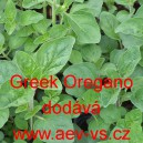 Oregano řecké Greek Oregano