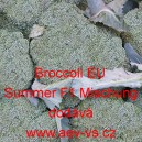 Brokolice hybridní Broccoli EU Summer F1 Mix